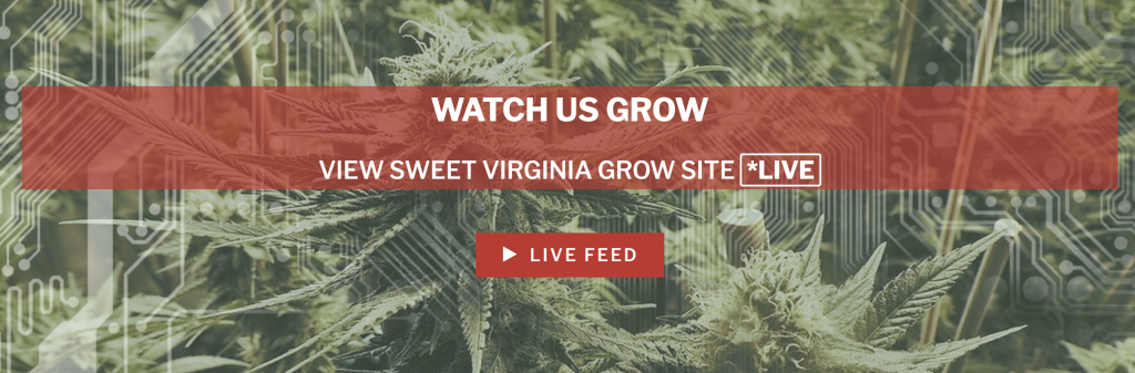 erbb sweet virginia live grow site